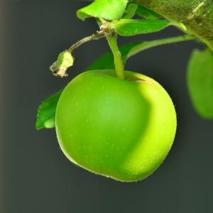 Pomme Verte - C